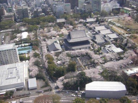 Aussicht vom Tokyo Tower #3, runter auf den Zojoji-Tempel, in dem wir vorher waren
