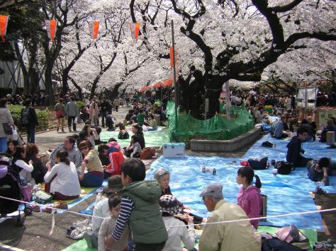 Hanami = Blütenschau mit Picknick