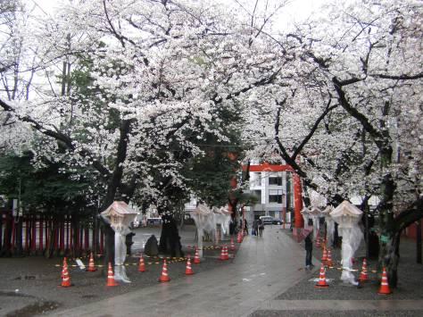 Und das wären dann wohl die ersten Sakura-Trees