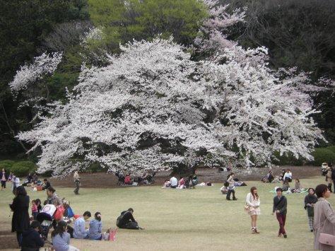Shinjuku Park #8 - WAS für ein unglaublich riesiger hübscher Baum!!!