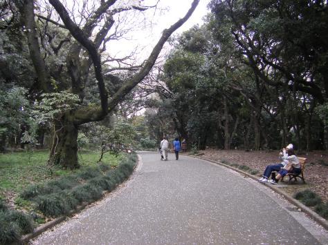 Shinjuku Park #9 - fallende Blütenblätter - ein Video davon kommt noch