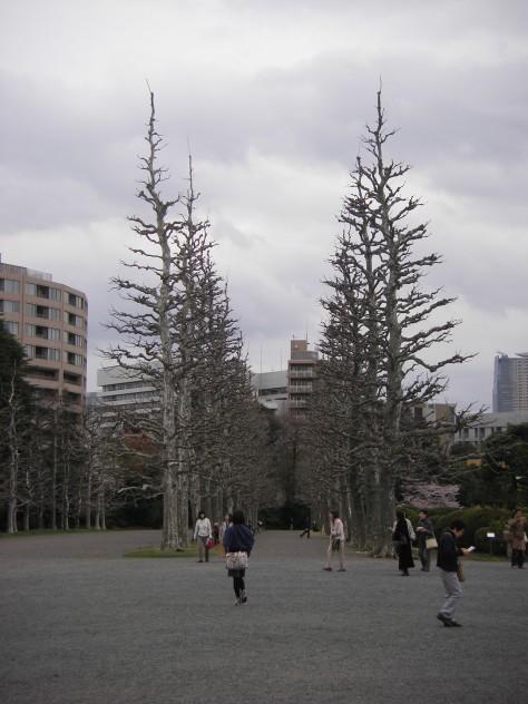 Shinjuku Park #5 - der französische Garten