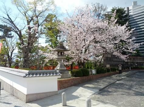Auch in Kyoto war die Kirschblüte noch in voller... Blüte...