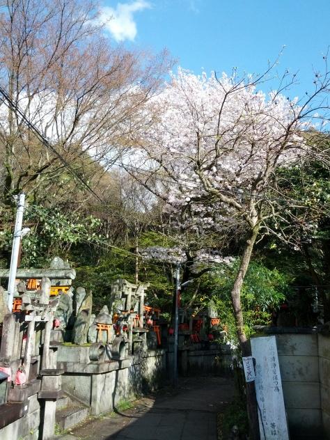 So sahen viele Zwischenebenen auf dem Berg Inari aus - kleine Nischen und Ecken mit kleinen Schreinen und kleinen Torii - gespendet von Besuchern