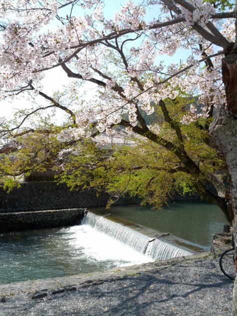 Arashiyama #2