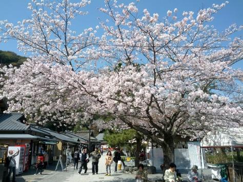 Arashiyama #5