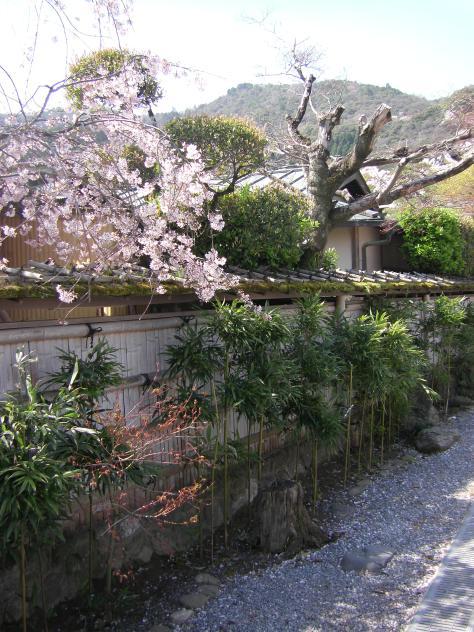 Arashiyama #7