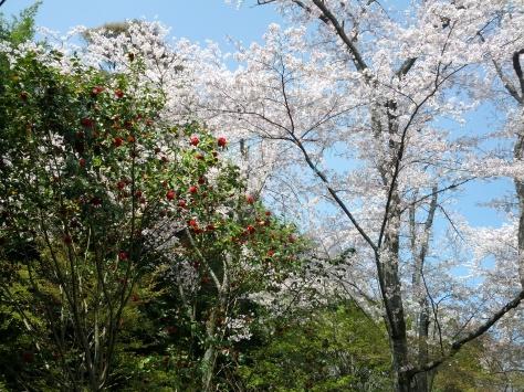 Arashiyama #10
