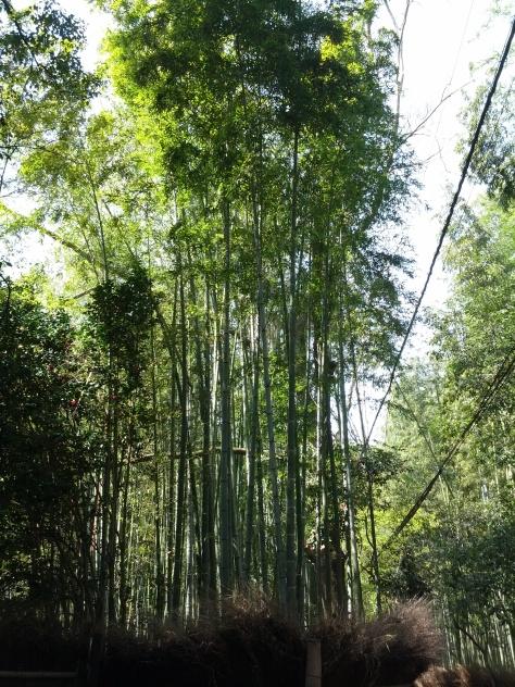 Bambus-Wald #1