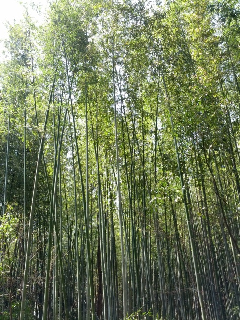 Bambus-Wald #2