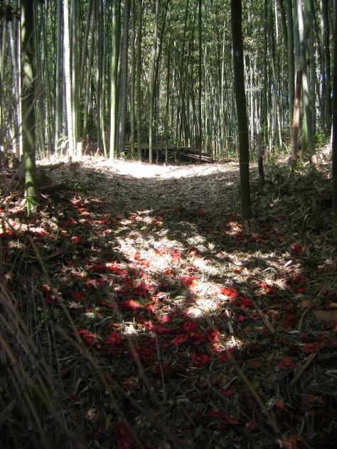 Bambus-Wald #3