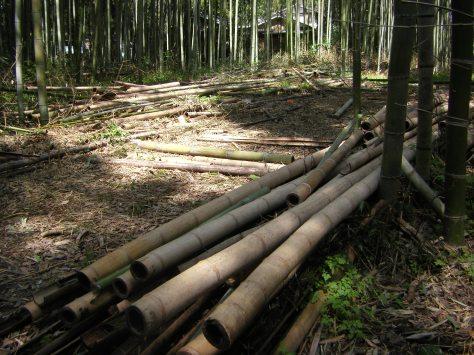 Bambus-Wald #5