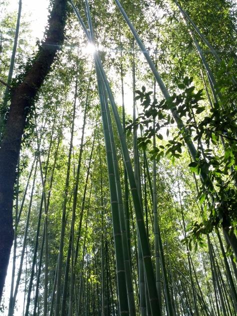 Bambus-Wald #6