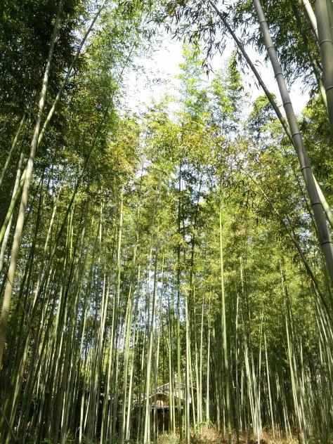 Bambus-Wald #7