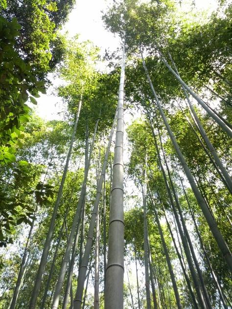 Bambus-Wald #8