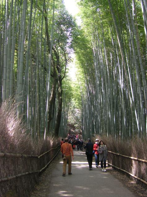 Bambus-Wald #10