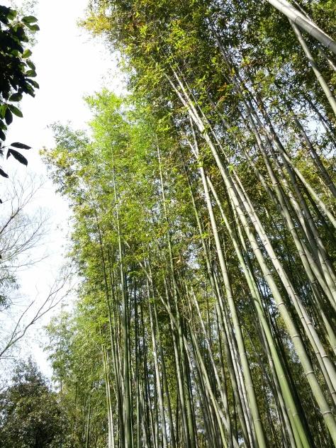 Bambus-Wald #11