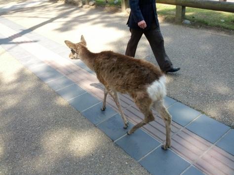 Nara #2