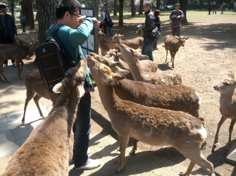 Nara #3 - ja, genau so wird man belagert, sobald man diese Cracker gekauft hat!