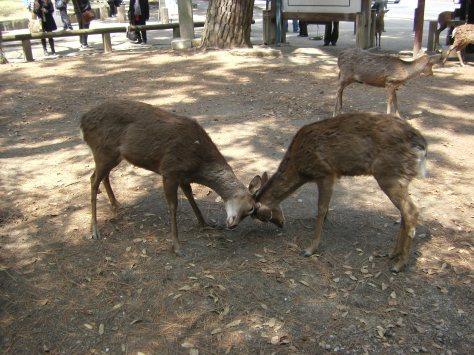 Nara #4