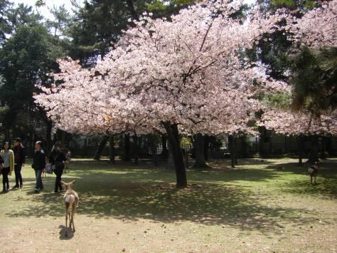 Nara #5