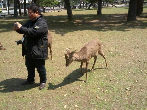 Nara #8 - Anlauf nehmen, uuuuund...!