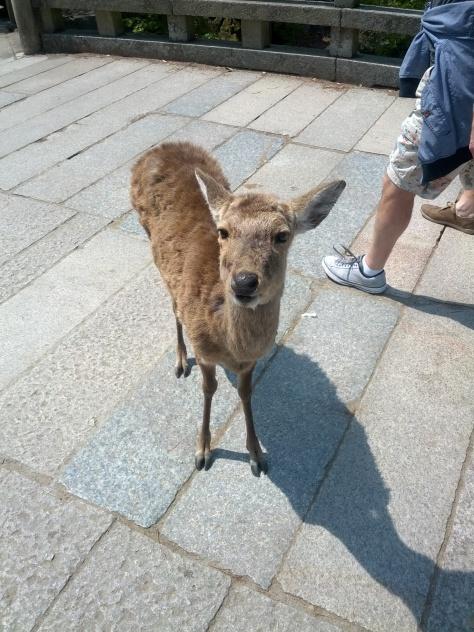 Nara #9 - Hallo, bist du meine Mama?