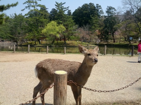 Nara #10 - KAWAIIIIIII!!!!