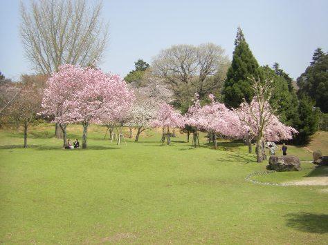 Nara #11