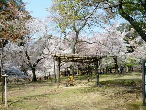 Nara #12
