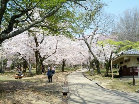 Nara #13