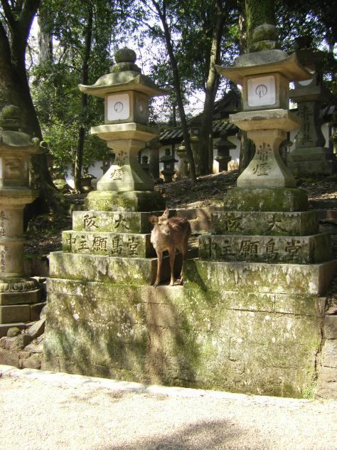 Kasuga Taisha #5