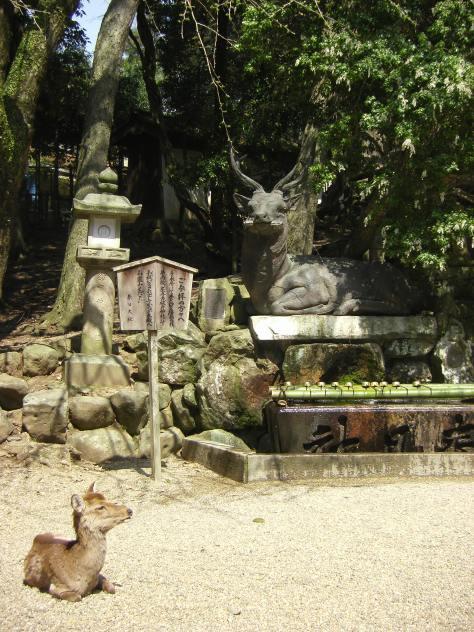 Kasuga Taisha #6