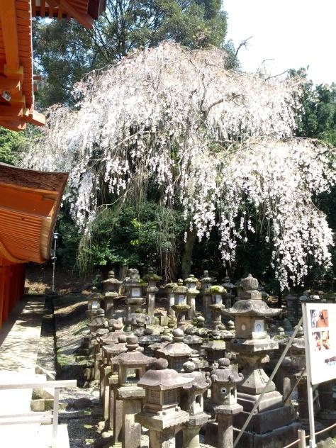 Kasuga Taisha #7