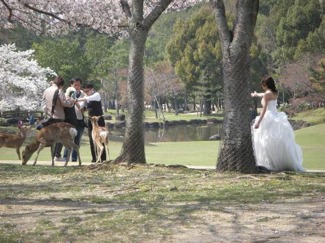 Nara #14 - ob die noch mal ein ordentliches Bild bekommen haben? :)