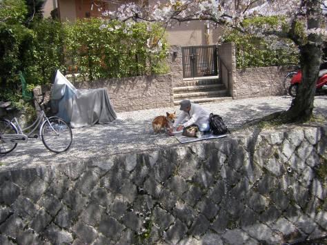 Einen Corgi in Japan MUSSTE ich natürlich fotografieren! Ein lässt grüßen ;)
